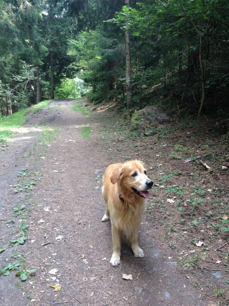 Il mio cane, Felakuti, assapora l'aria di montagna.