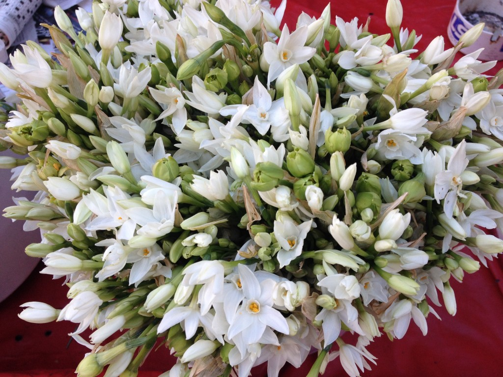 Bouquet di aglio selvatico, venduto per le strade di Atene.
