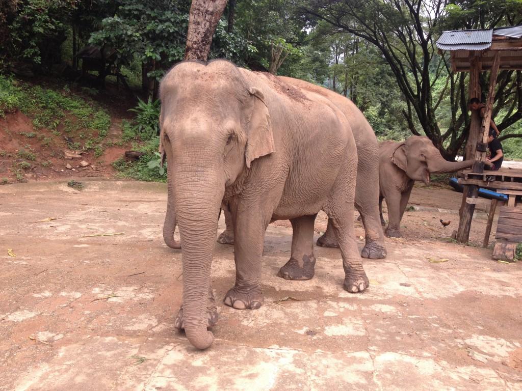 Elefanti, Mae Taeng National Park @oltreilbalcone