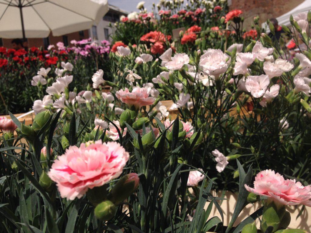 Flora et Decora @oltreilbalcone