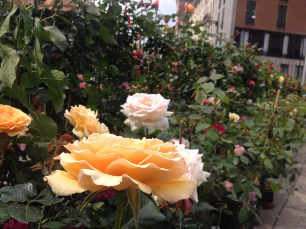 Rose, Flora et Decora @oltreilbalcone