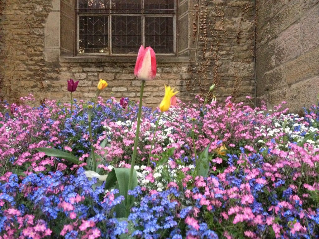 Tulipani e fiori colorati davanti a Saint-Michel, Digione
