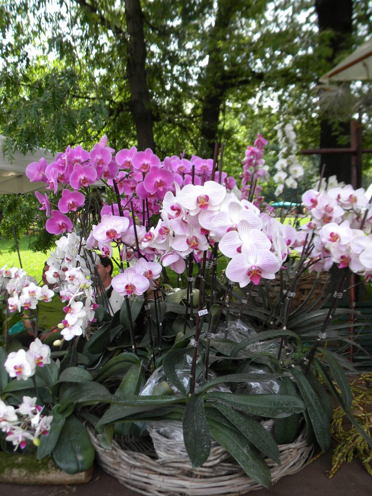 Orchidee, Orticola 2012
