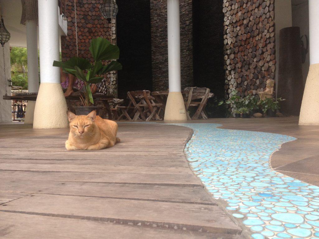 """Il gatto """"custode"""" della Spa del Ko Tao Cabana"""