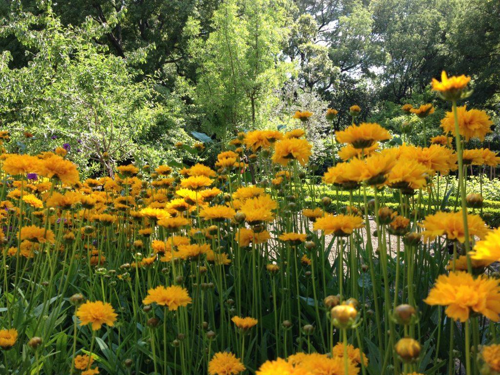 Real Jardín Botánico @oltreilbalcone