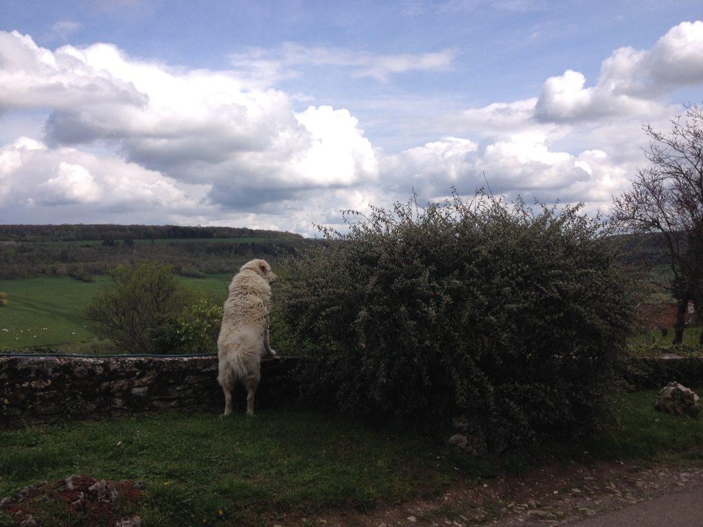 Un cane ammira il panorama.