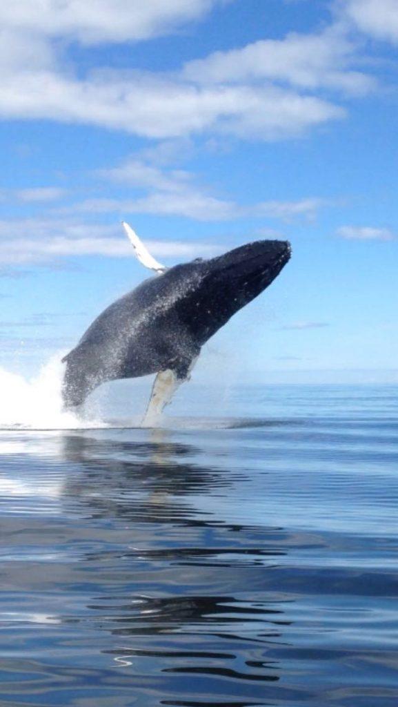 La balena nera.