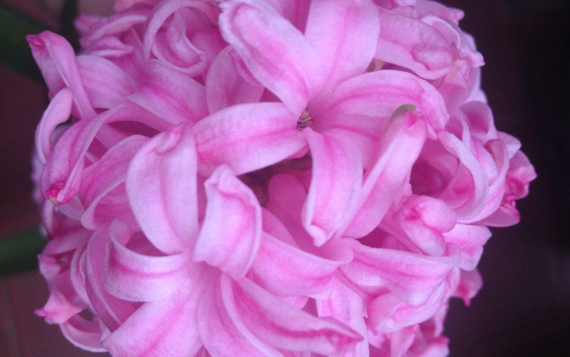 Fiori Campanelle Da Balcone fiori profumati archivi | oltreilbalcone