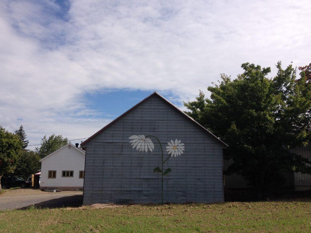 Una fattoria dell'isola.