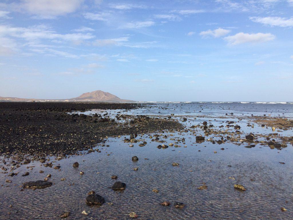 Shark Bay Sal