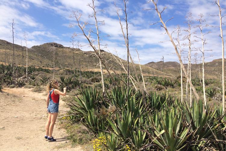 Distesa di agavi a Cabo de Gata