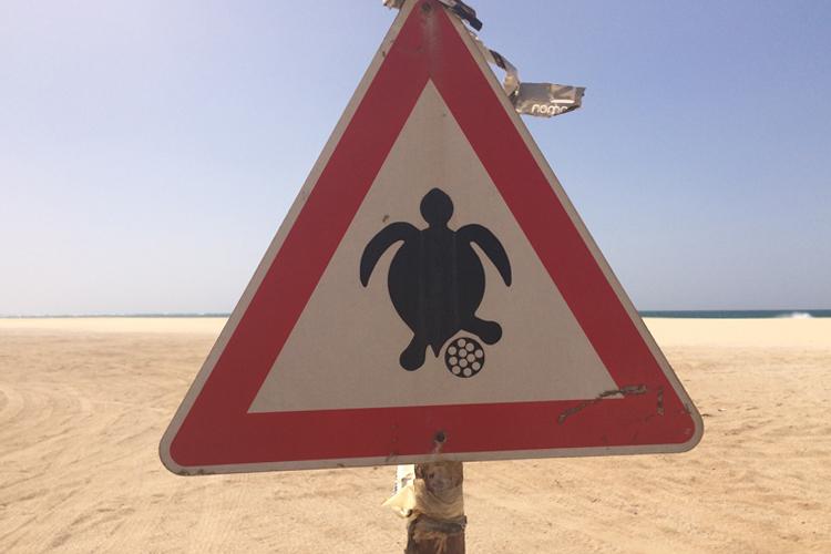 cartello che avvisa della presenza delle tartarughe sulla spiaggia a Boa Vista