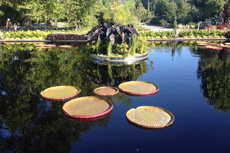 Un laghetto con fiori acquatici nel Giardino Botanico di Montréal
