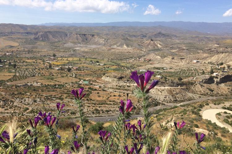 Veduta panoramica sul deserto da Tabernas.