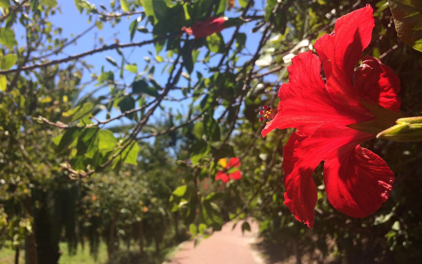 Il Sentiero degli Ibischi nel Giardino Botanico di Malaga.