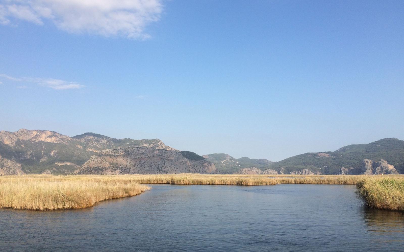 Sul fiume, la suggestiva vegetazione ammirata dalla barca.