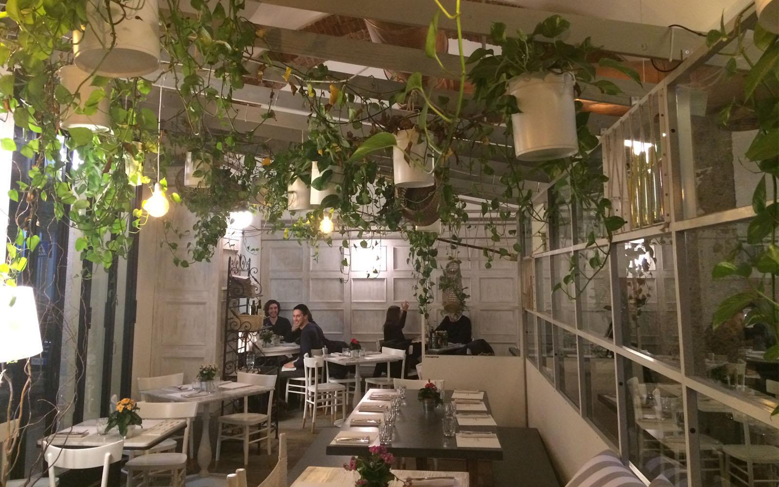 La Pizzeria Nazionale di Milano, con le piante di potos che pendono dal soffitto.