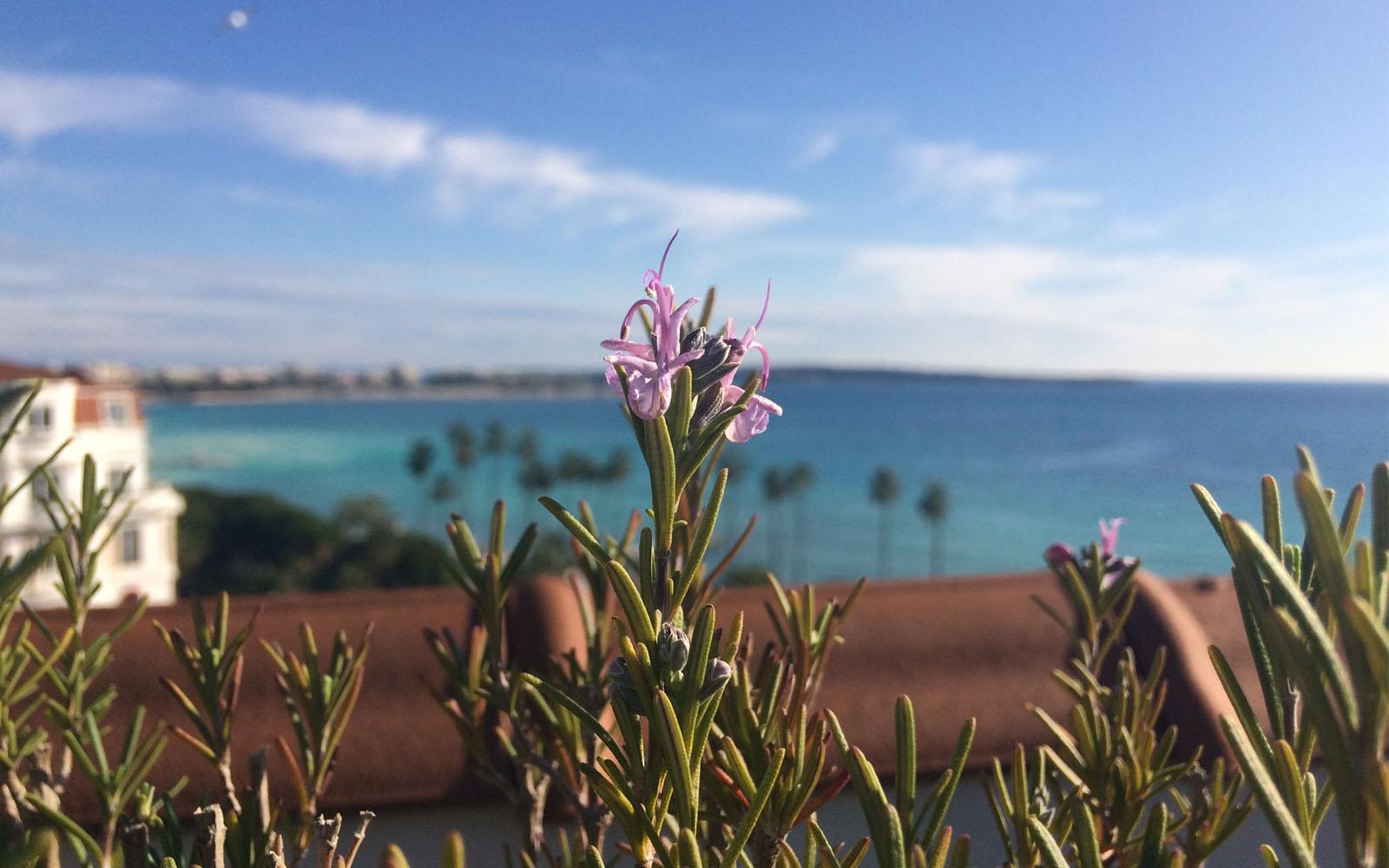La veduta su Cannes dall'orto sul tetto dell'Hotel Barrière Le Majestic.