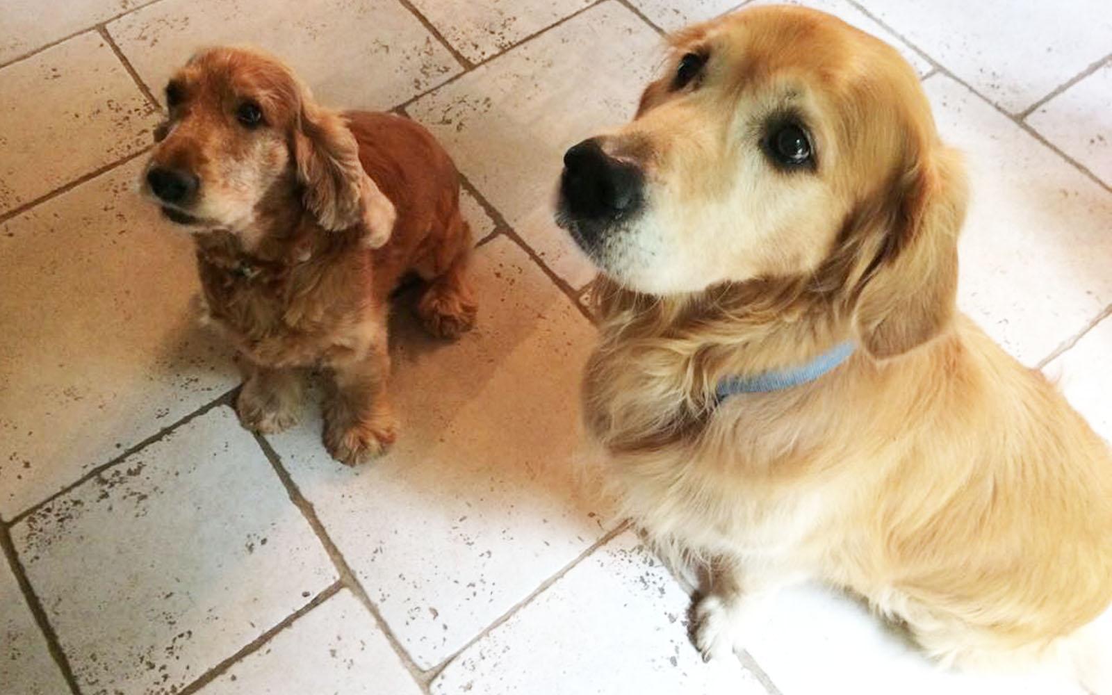 Il mio cane Felakuti insieme al suo nuovo amico Figaro, incontrato nel Logis du Peu Girard