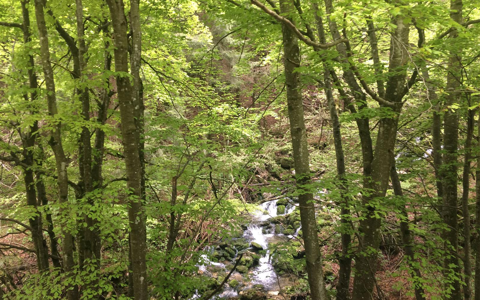 Un bosco di faggi, paesaggio tipico del Monte Baldo.