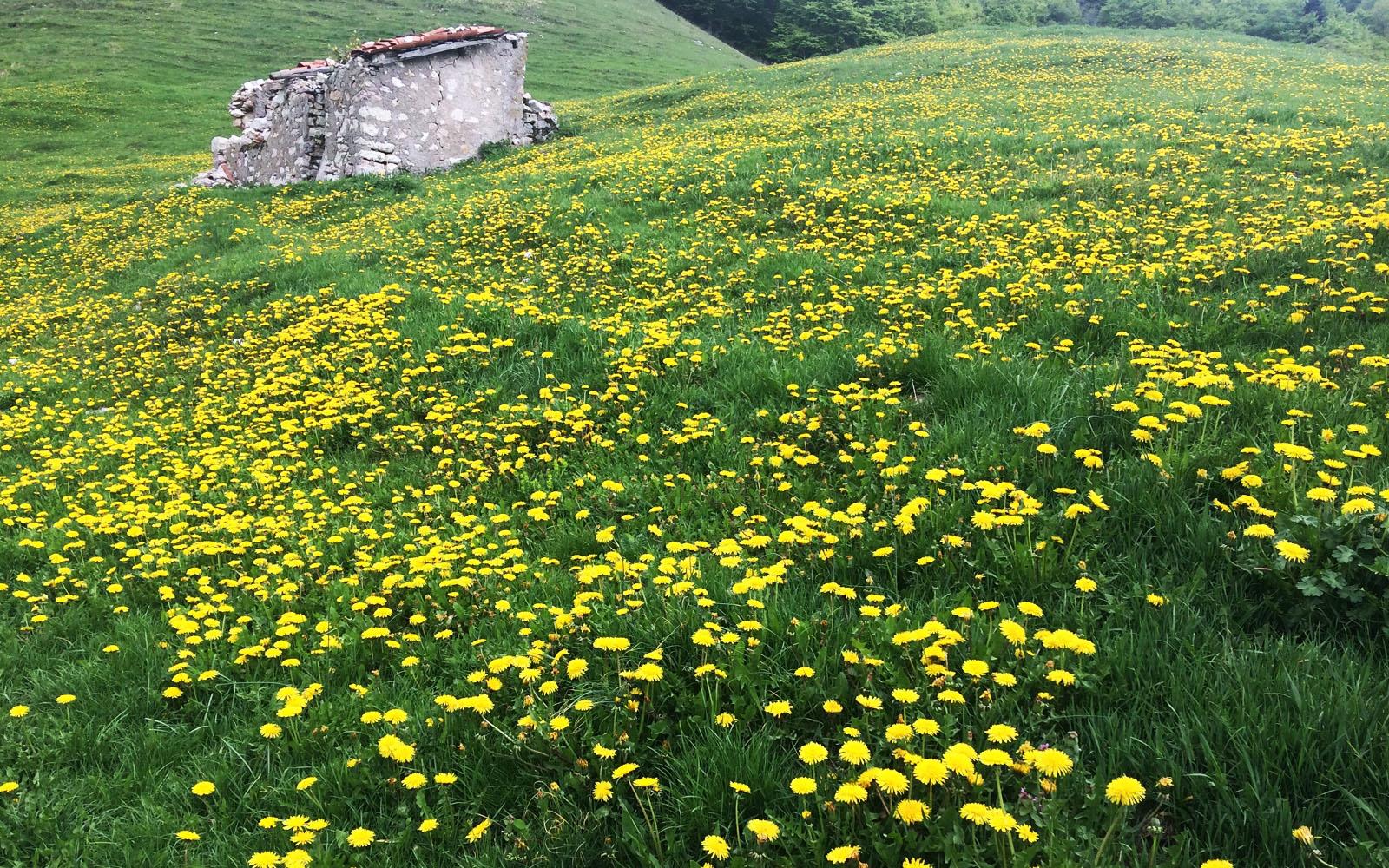 Un prato in fiore nel Parco del Monte Baldo