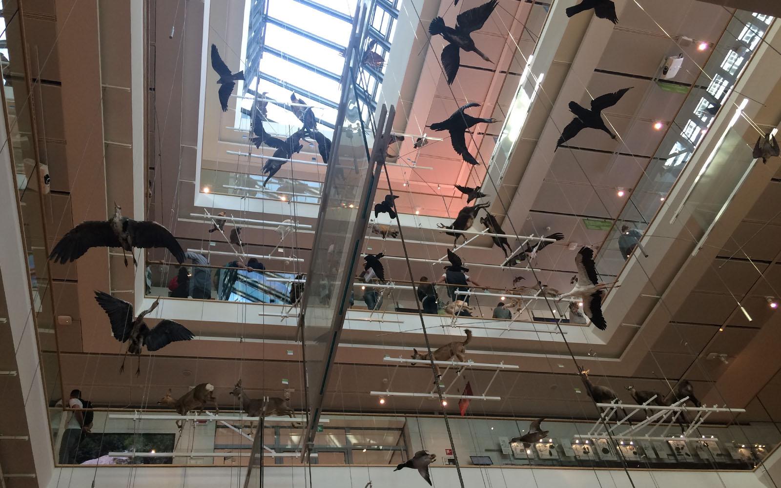 Uno scorcio del Museo della Scienza di Trento.