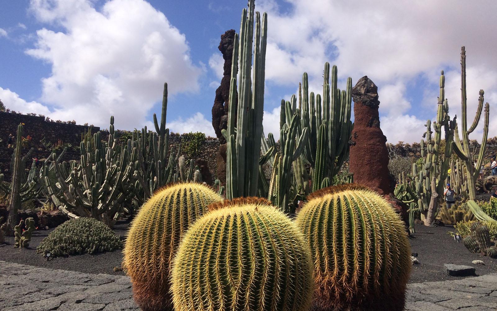 Uno scorcio del Giardino dei Cactus di Lanzarote, opera di Manrique.