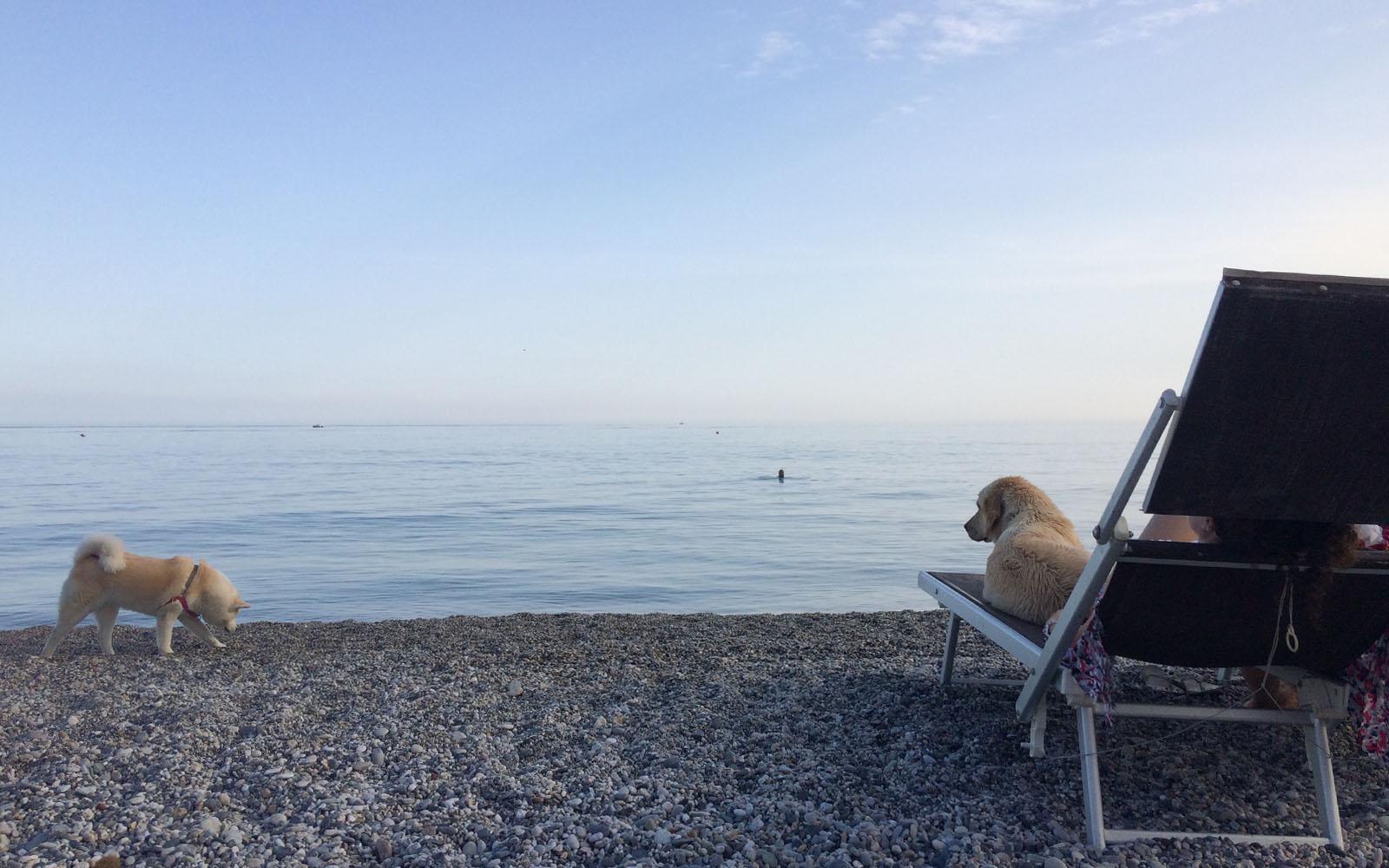 Matrimonio Spiaggia Varigotti : In spiaggia con il cane week end a varigotti nel ponente