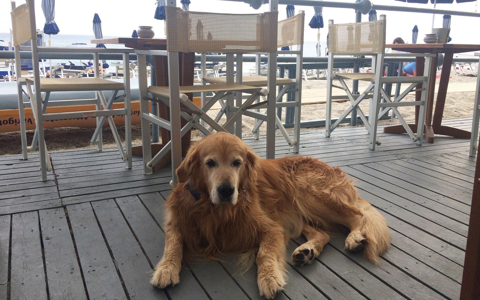 Il bar della spiaggia 20 Riviera, a Varigotti, da una prospettiva a quattro zampe.