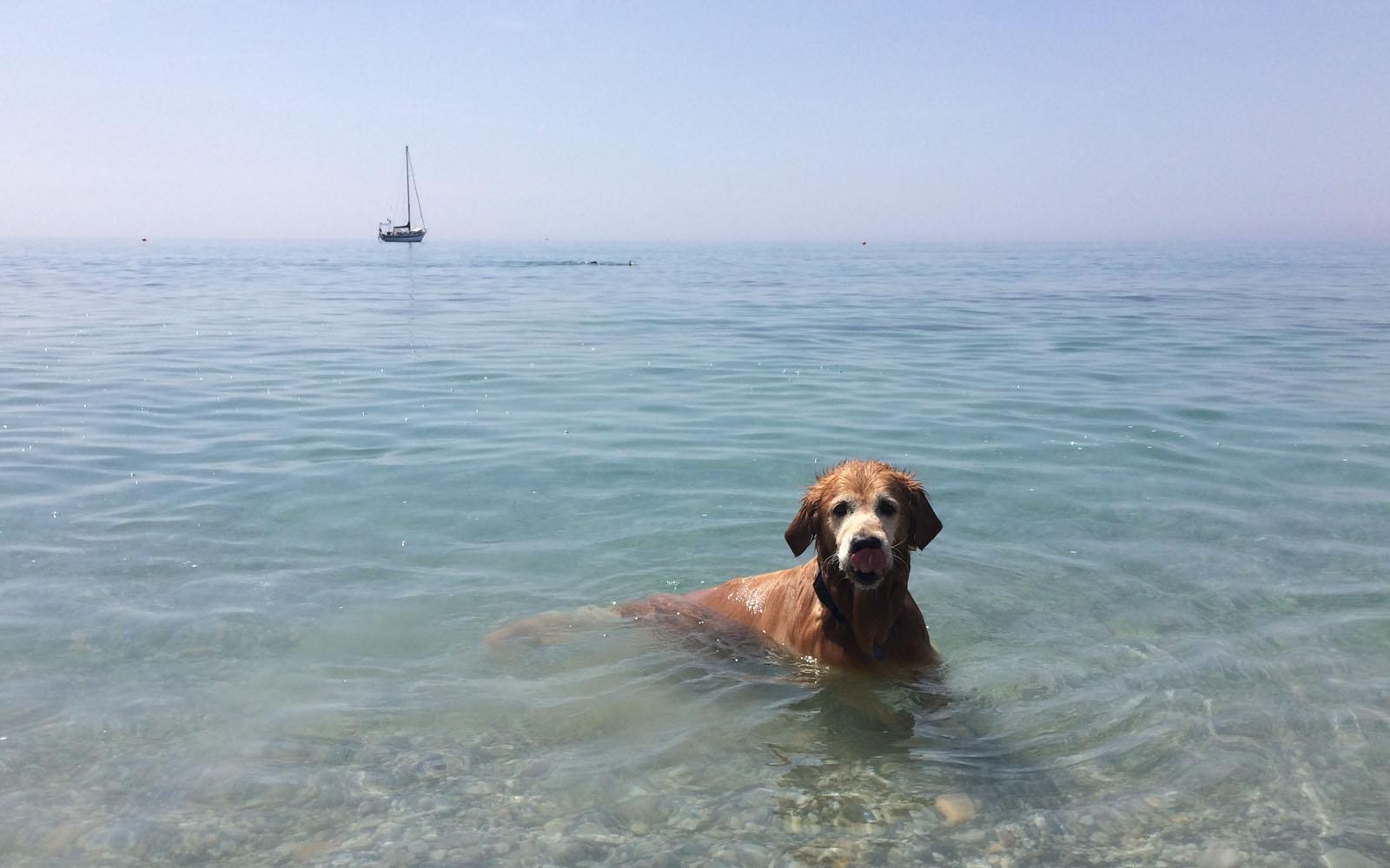 Il mio cane Felakuti mentre fa il bagno a Varigotti, nella spiaggia 20 Riviera.