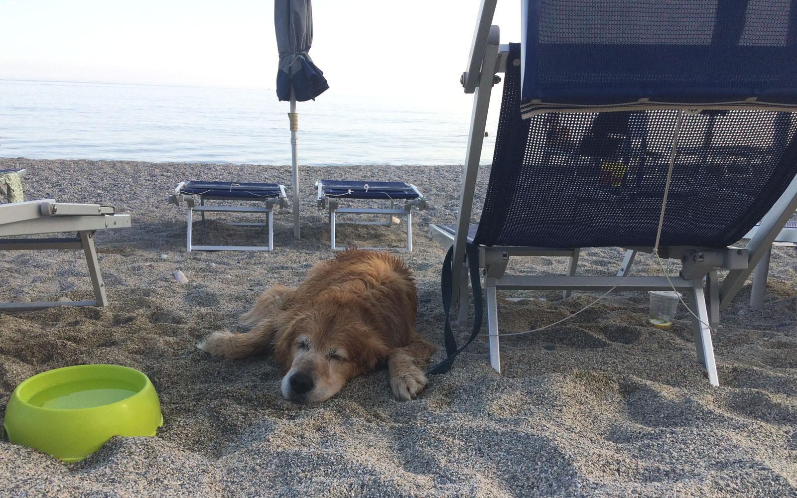 Il mio cane Felakuti sotto l'ombrellone, con la ciotola in dotazione del lido 20 Riviera.