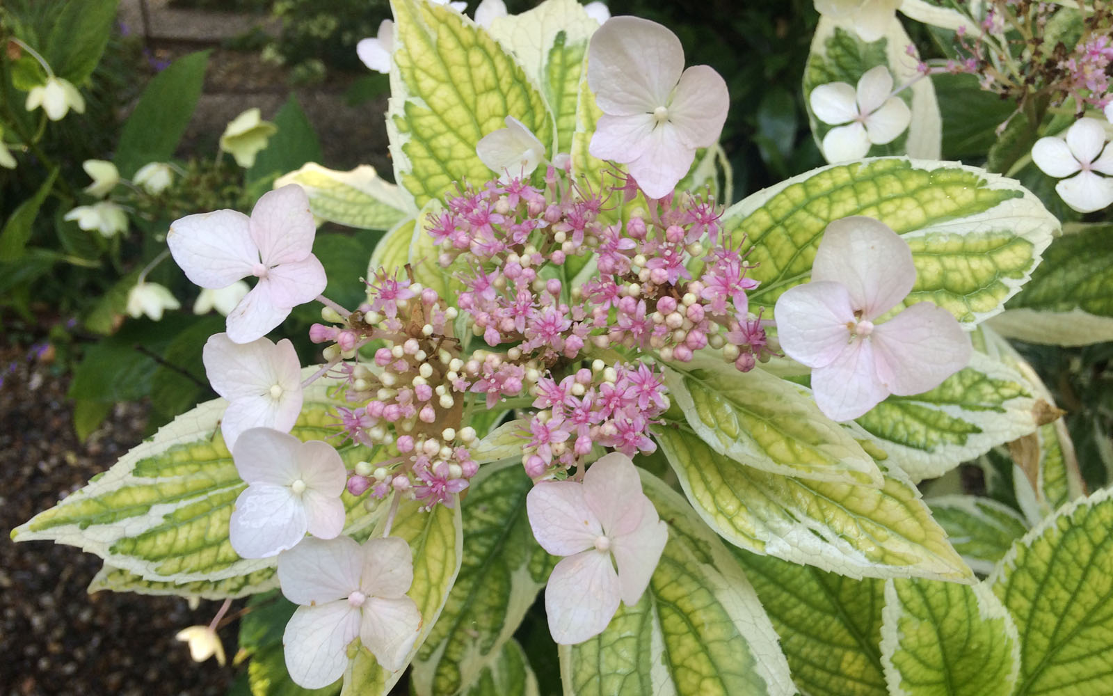 Orto botanico di brera il giardino segreto di milano for Cabine di querce reali amano va