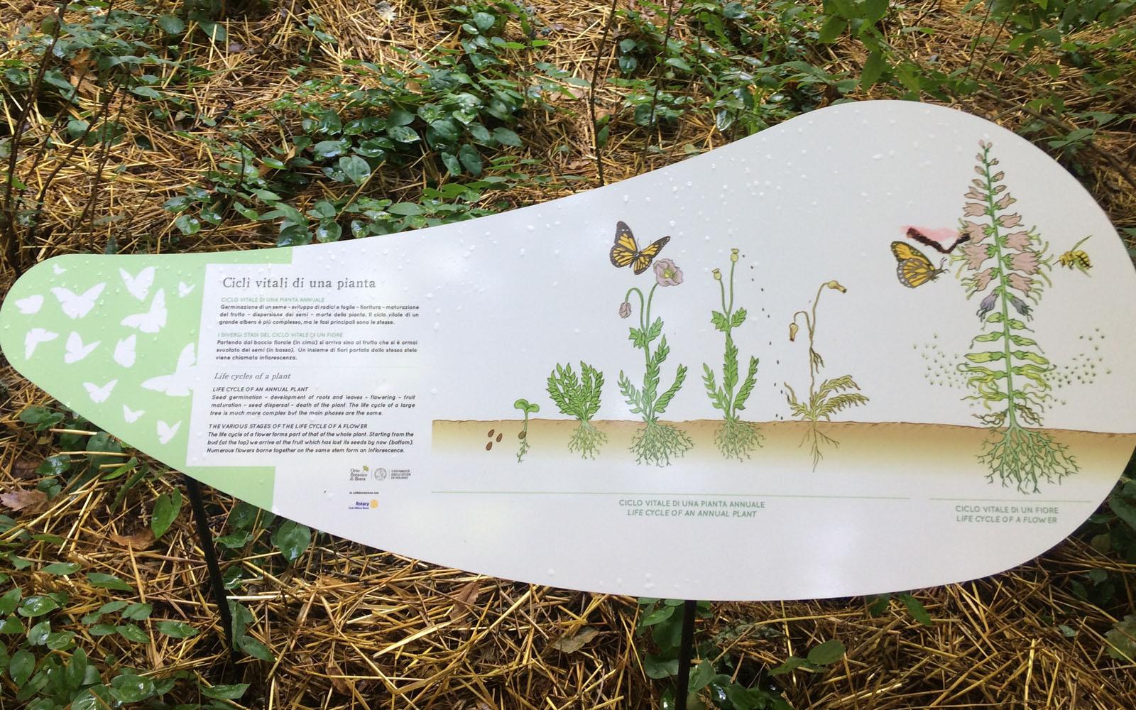 Uno dei pannelli informativi, che illustra i cicli vitali di una pianta.