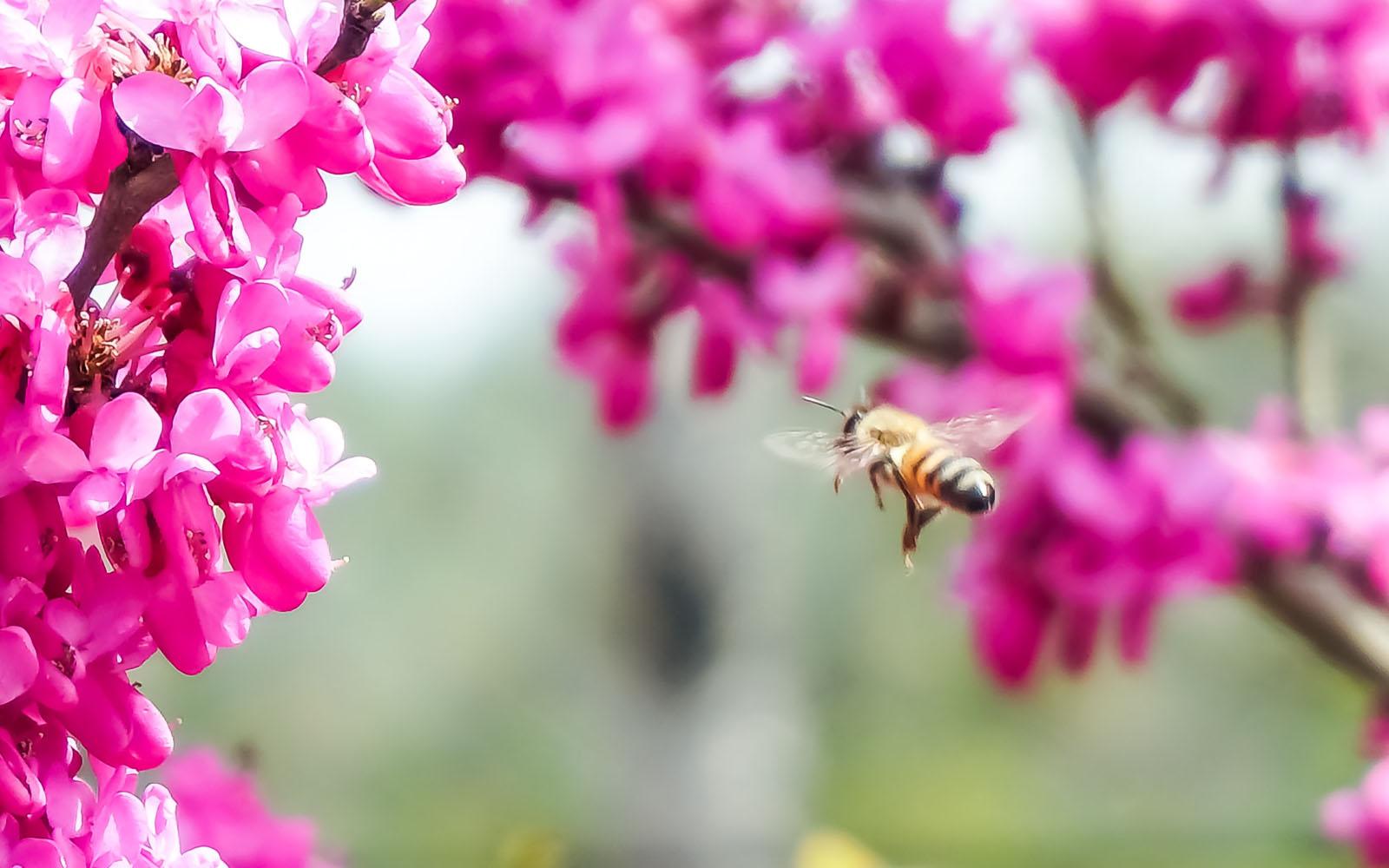 Un'ape in terrazzo si accinge ad impollinare i fiori.