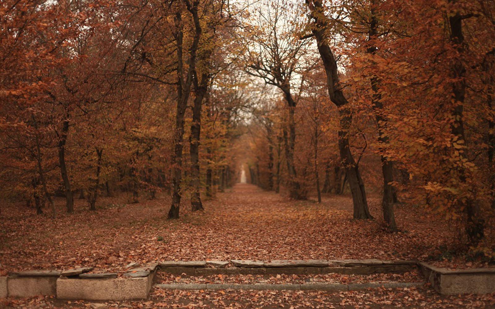 Uno scorcio del giardino di Villa Arconati in autunno.