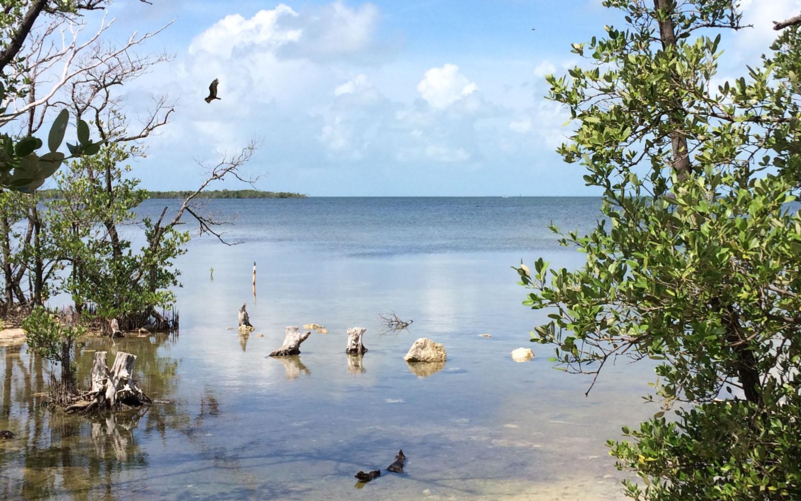 Il Laura Quinn Wild Bird Sanctuary, con vista sull'Oceano.