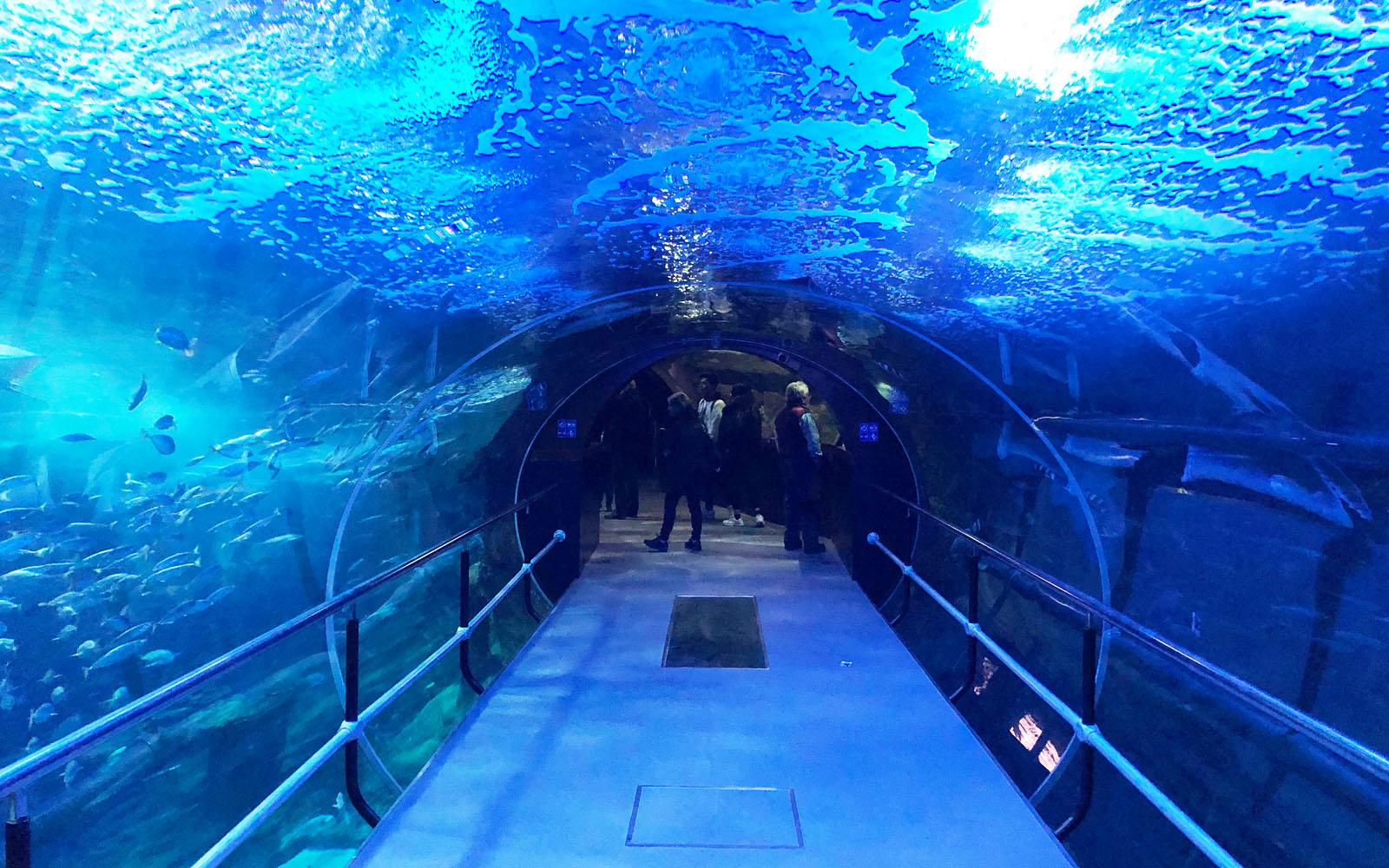 L'Oceanário dell'acquario di San Sebastian