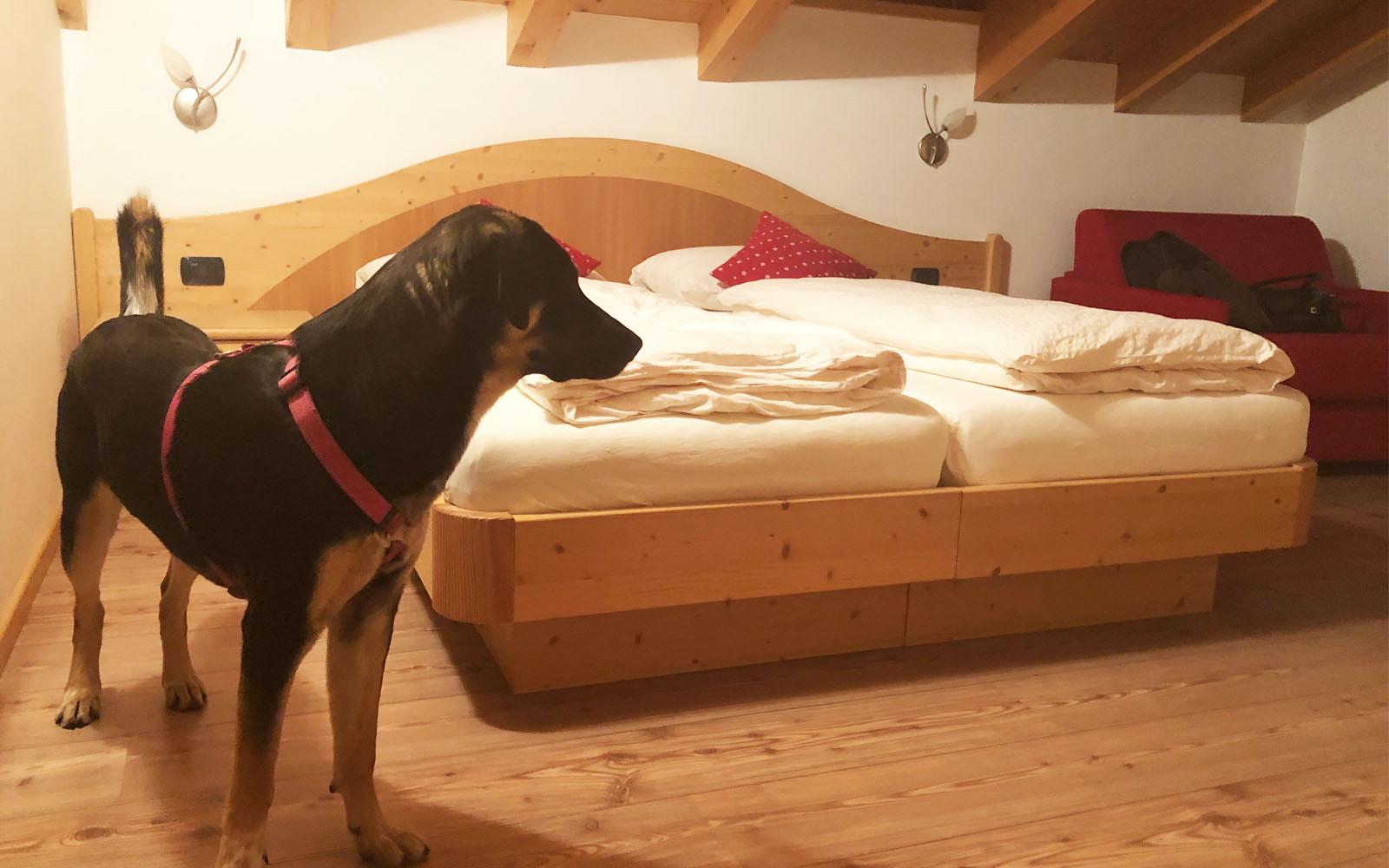 La mia camera nell'agriturismo Maso Chemela, con il mio cane Pastis.