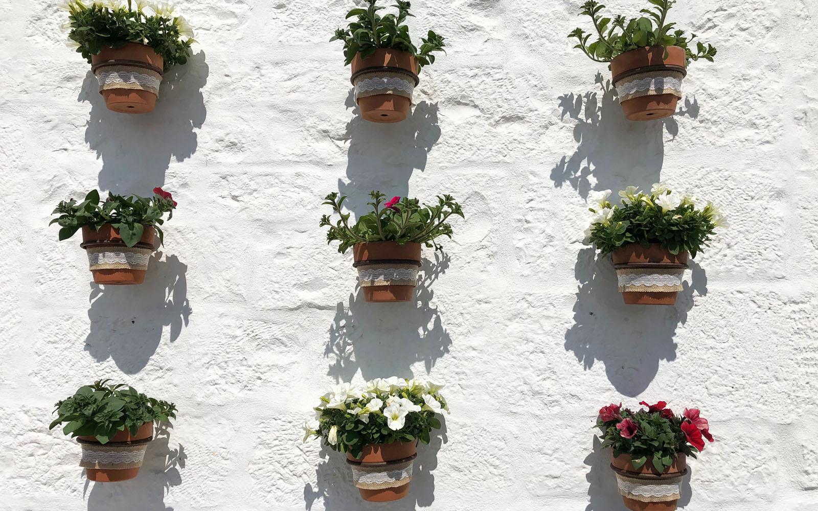 I fiori che impreziosiscono  il borgo di Locorotondo.