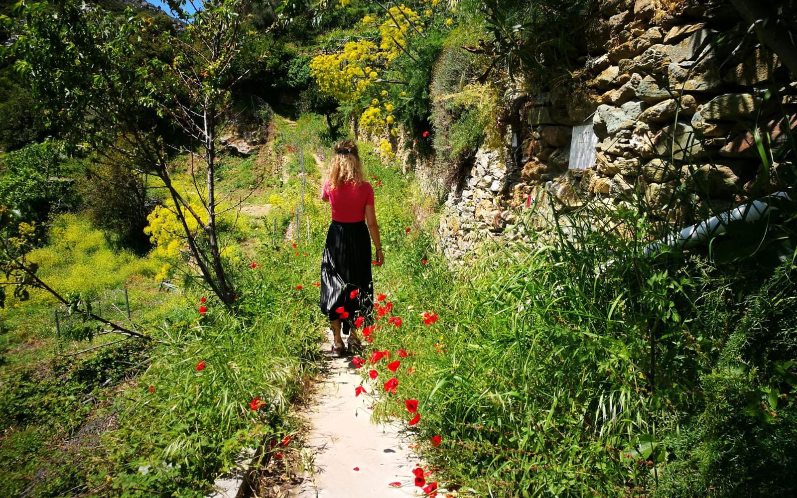 Trekking tra i fiori nell'isola di Andros, Cicladi.