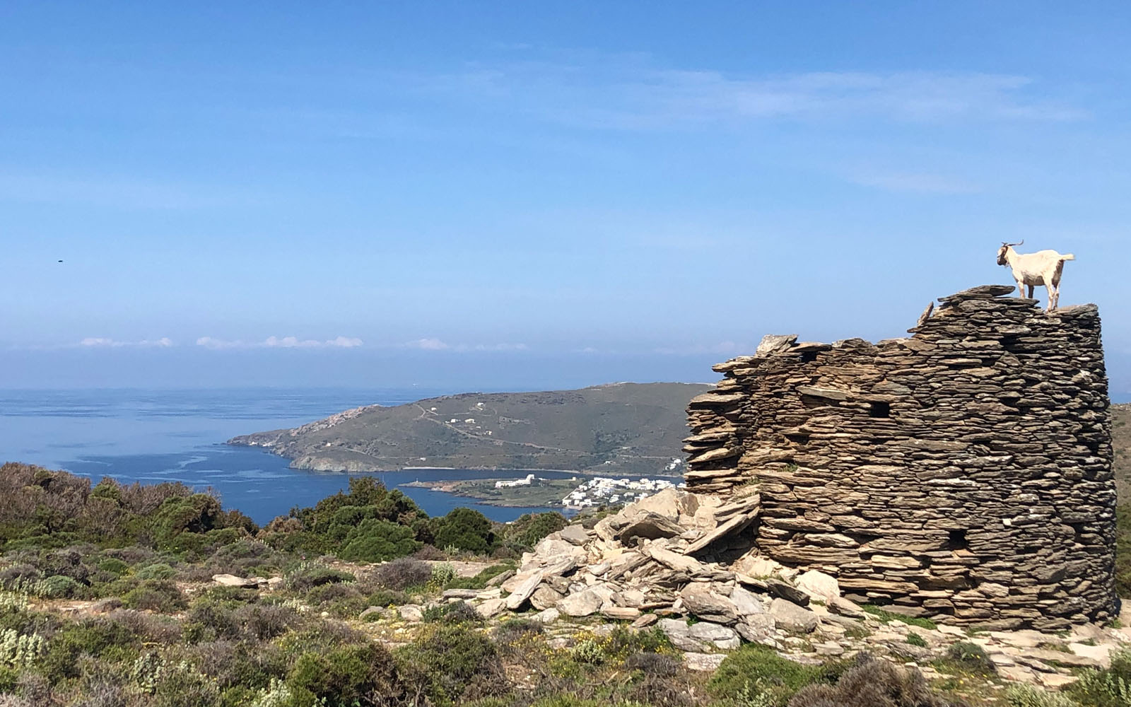 Una capretta ammira il paesaggio dell'isola di Andros, la più a nord delle Cicladi.