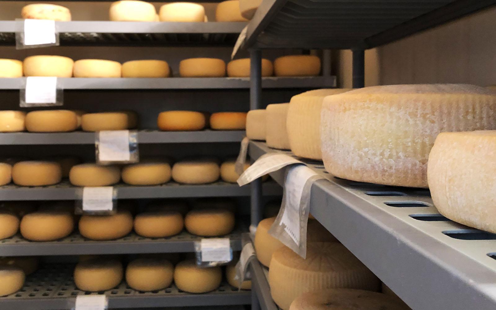 Le forme di formaggio del caseificio Conte