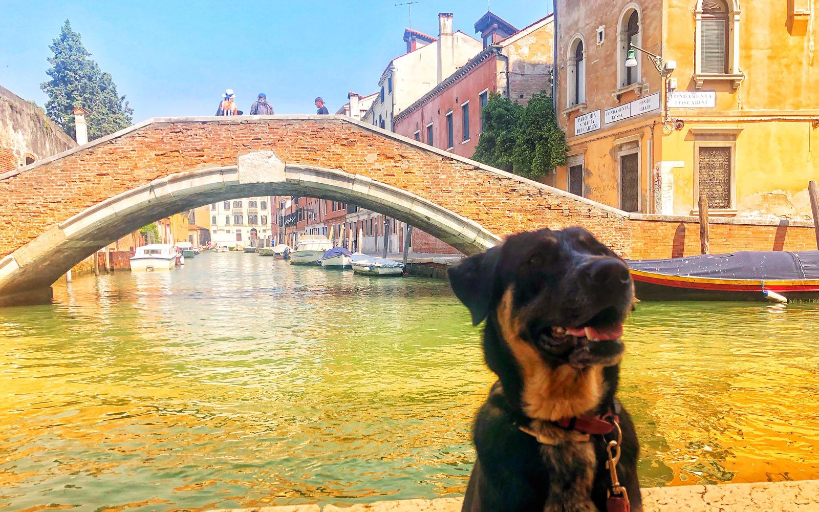 La mia cagnolina Pastis, nel sestiere di dorsoduro a Venezia.
