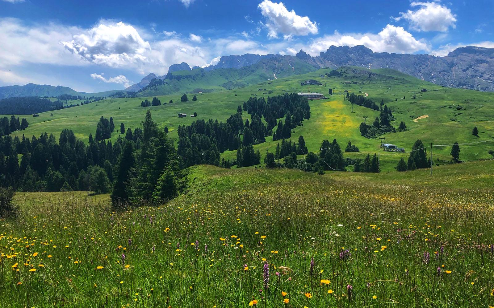 I prati in fiore dell'Alpe di Siusi.