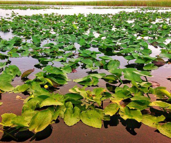 Everglades © oltreilbalcone