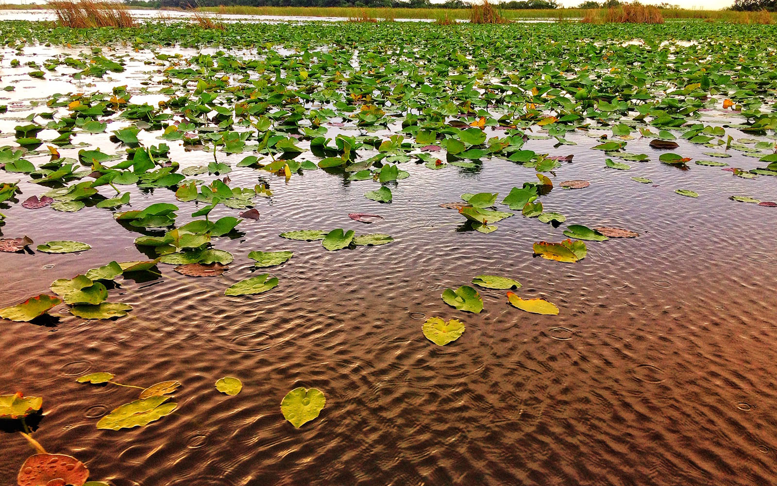 """Il """"mare d'erba"""" delle Everglades."""