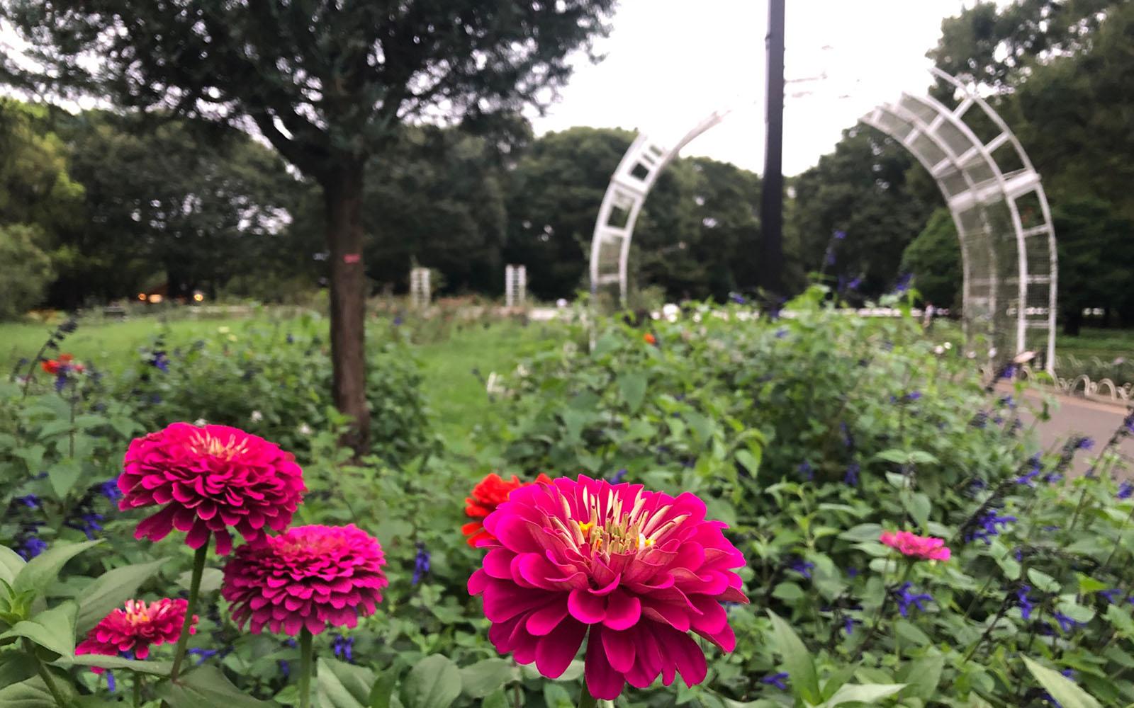 Il parco Yoyogi-kōen di Tokyo.