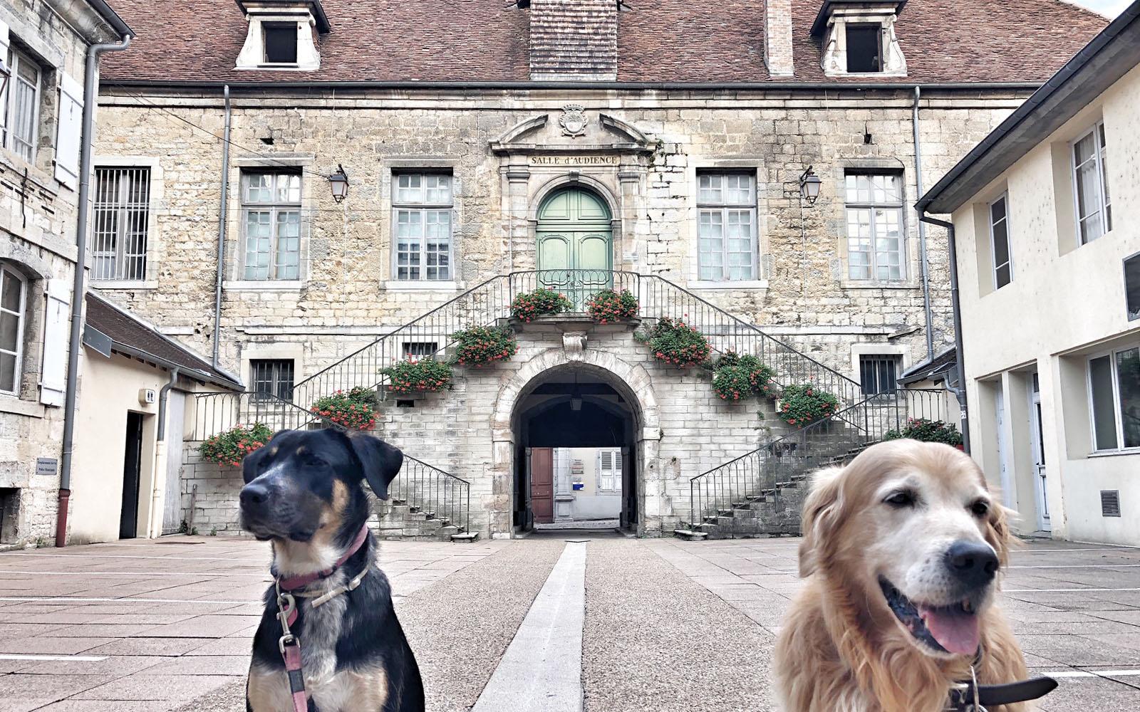 I miei cani, Pastis e Felakuti, nel cortile del municipio di Poligny.