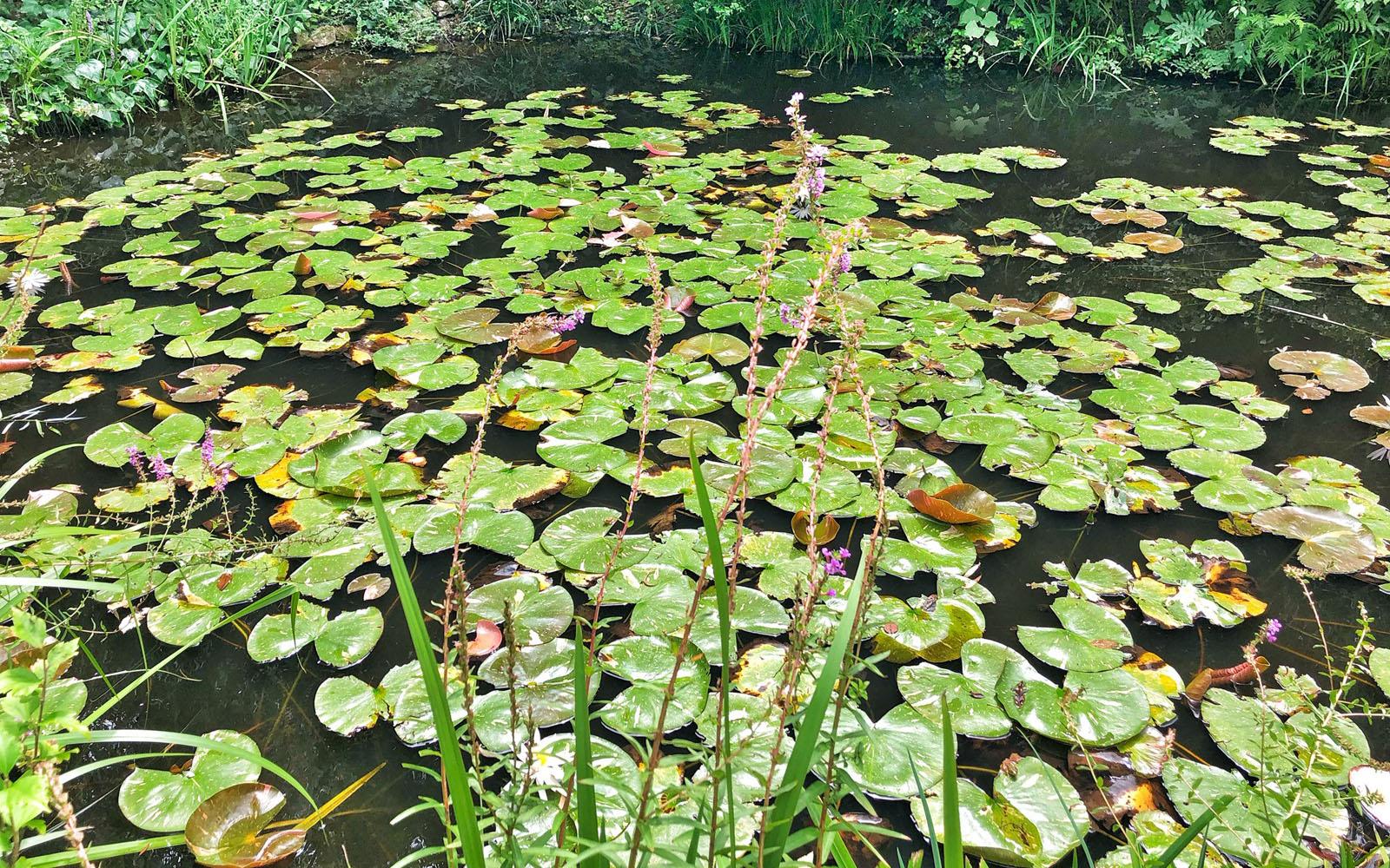 Le ninfee nel giardino del museo Chichu, ispirato a quello di Monet.