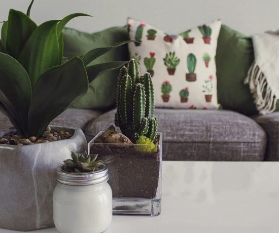 Benefici piante da appartamento